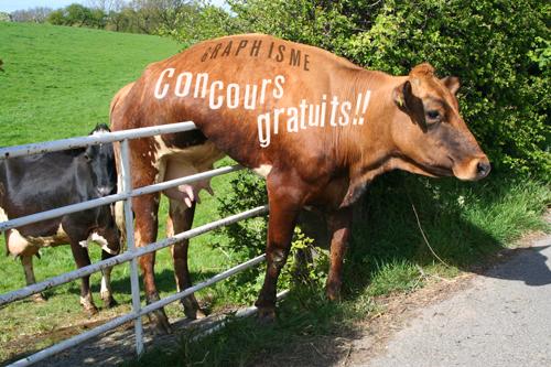 Vache-concours-gratuit-2