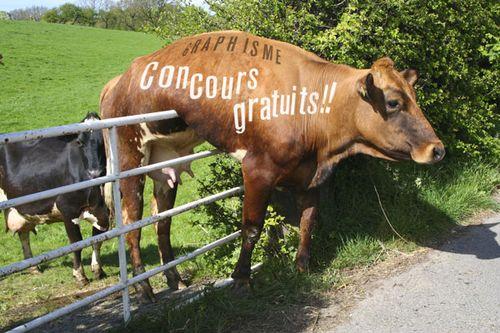 Vache-concours-gratuit-2-600
